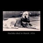 Хатико_Самый верный друг_Hachiko_A Dog's Story
