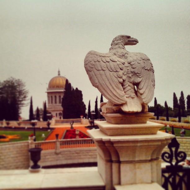 Птичка. Хайфа. Израиль