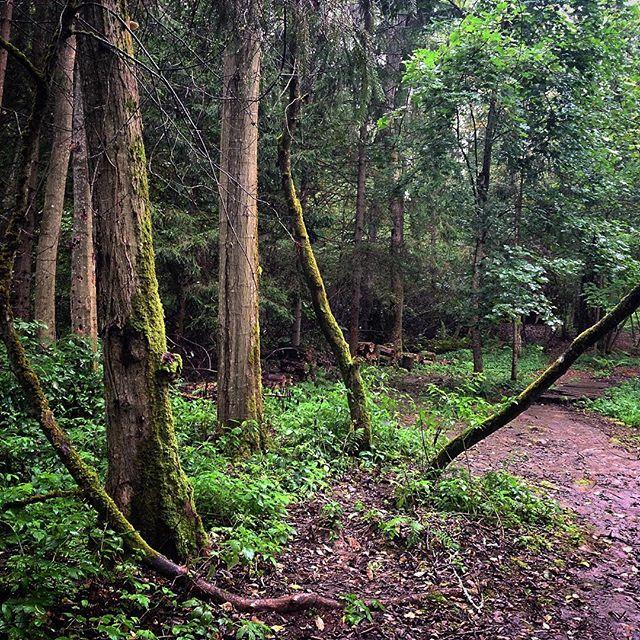 Воскресная прогулка в лесу